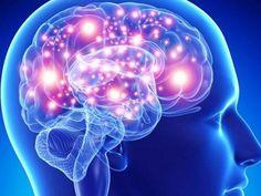 hierbas y especias para tu cerebro