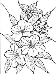 Вьюны Скачать новые раскраски цветы