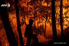 A member of the UME (Unit Military Emergency) works near a fire blazing next the village of Entrimo, northwestern Spain on September 7, 2016. Thousands of firefighters in Spain and Portugal were yesterday battling blazes that threatened locals and...