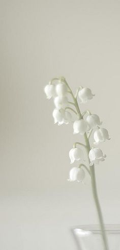 lily of the valley - wanted these for my wedding but they were impossible to get hold of.