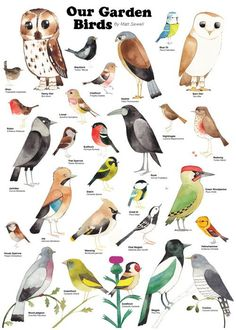 Matt Sewell - Our Garden Birds:  What is there not to love about this - lovely stuff.