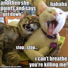 Cats roasting owners