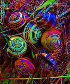   amazing snails
