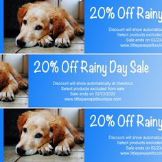 It never rains in sunny California! Take advantage of our Off Rainy Day Sale going on now through See website for more details. Sunny California, Pet Boutique, Rabbits, Website, Pets, Day, Rabbit, Hare, Bunny
