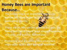 honey-bee-2-638.jpg (638×479)
