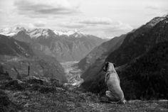 "marcherren: "" Watch dog Nikon FM2n, Nikkor AIs 50mm f/1.4, Fuji Acros 100 """