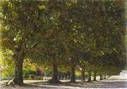 Benefícios da arborização de ruas