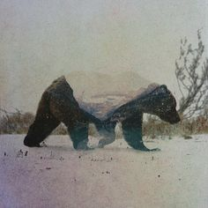 Double Exposure Portraits Of Wild Animals That Reflect Their Habitat