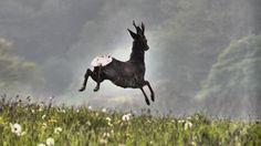 Roe Deer in action. Photo taken by Sam Lythgoe-Jones