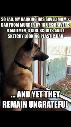 Welcome to our funny German Shepherd dog memes gallery! Funny Dog Memes, Funny Animal Memes, Cute Funny Animals, Funny Animal Pictures, Funny Dogs, Memes Humor, Funny Dog Sayings, Dog Pictures, Cats Humor
