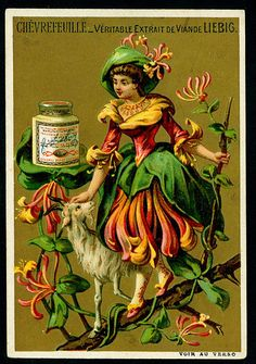 Liebig S217 - Flower Girls 1888 - Honeysuckle | Flickr - Photo Sharing!
