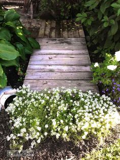 Pallet walkway and alyssum during a garden gone wild therapy session via  http://www.funkyjunkinteriors.net/