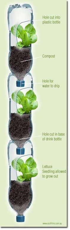 Simple Vertical Gardens from recycled plastic bottles