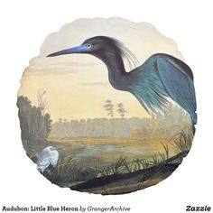 Audubon: Little Blue