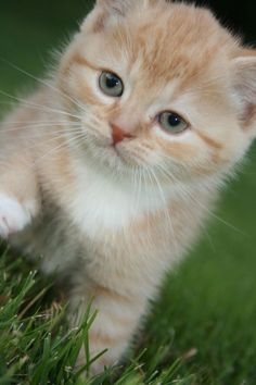 So cute and so sweet and so small. I love kittens. Incensewoman