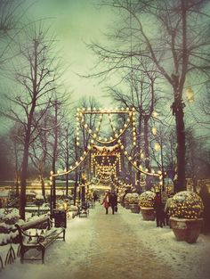 Christmas in Tivoli Gardens, Copenhagen, Denmark  It almost looks like there are glass domes over the lit bushes