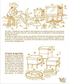 La Familia de la Apicultura - The Beekeeping of Family: Manual Apícola Ilustrado - Beekeeping Illustrated Manual. Drone Bee, Bee Hive Plans, Beekeeping For Beginners, Bee Boxes, Bee Farm, Royal Jelly, Family Traditions, Queen Bees, Bee Keeping