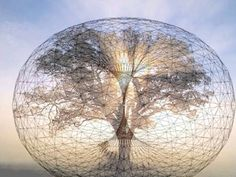 a tree within a torus > universal life sustaining flow