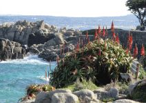 1000 Images About Pacific Grove On Pinterest Pacific