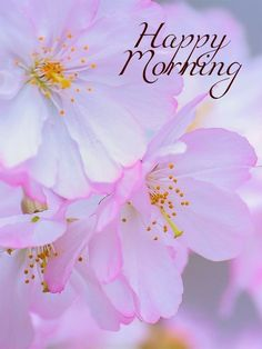 Cute Good Morning Images, Good Morning Cards, Good Morning Flowers, Good Morning Good Night, Good Morning Wishes, Good Morning Quotes, Good Day, Good Night I Love You, Good Morning Wallpaper