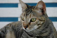 RULY - Gato adoptado - AsoKa el grande