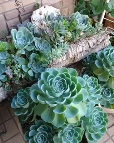 For how-to's, tips and tricks, and inspiration on all things succulents. check out our website for some helpful articles to encourage you to be the best succulent gardener! Succulent Gardening, Container Gardening Vegetables, Succulent Terrarium, Planting Succulents, Garden Pots, Planting Flowers, Container Flowers, Container Plants, Gemüseanbau In Kübeln