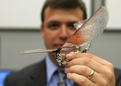 Dr. Gregory Parker, Micro Air Vehicle team leader, holds a small winged drone that resembles an insect, in the U.S. Air Force Micro Air Vehicles lab at Wright Patterson Air Force Base in Dayton, Ohio