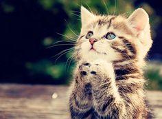 Plezi: 22 imagens de bichinhos fofinhos rezando