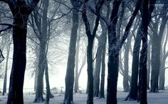 dark photography | Dark forest in winter wallpaper - Photography wallpapers - #16423