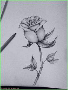 Art Sketches Ideas First attempt at a black and grey rose Best Art Pin is part of Pencil art drawings - First attempt at a black and grey rose First attempt at a black and grey rose Rose Drawing Tattoo, Flower Art Drawing, Pencil Drawings Of Flowers, Flower Sketches, Cool Art Drawings, Pencil Art Drawings, Easy Drawings, Drawing Sketches, Tattoo Drawings
