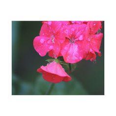Wet pink flower photo canvas print