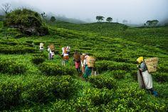 Workers hand-pick tea leaves on the Makaibari Tea Estate in Kurseong, West Bengal, India, on Monday, Sept. 8, 2014. Tourist Places ACTRESS PAYAL RAJPUT  PHOTO GALLERY  | 3.BP.BLOGSPOT.COM  #EDUCRATSWEB 2020-07-28 3.bp.blogspot.com https://3.bp.blogspot.com/-Utu7DMvEgD4/Wz7P_-V549I/AAAAAAAAP-c/EIE7uE6caN4k2Djl6e8qU6GVOBMWI7I4gCLcBGAs/s640/actress-payal-rajput-hot-photoshoot-30.jpg