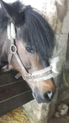 Romanie Horses, Animals, Animaux, Horse, Animal, Animales, Animais