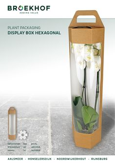Display Box Hexagonal Very nice and suitable box for your Phalaenopsis plants. #Broekhof #Phalaenopsis #packaging