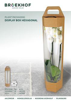 Display Box Hexagonal Very nice and suitable box for your Phalaenopsis plants. #Broekhof #Phalaenopsis #packaging