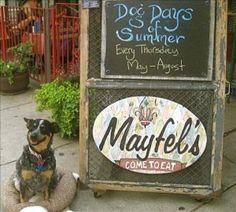 dog friendly Asheville