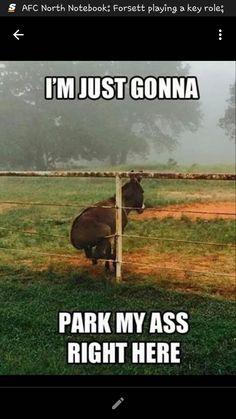 Park you ass baby!