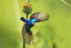 Awesome+Wild+Animal   are called wild life photographer here are best photos of wild animals ...