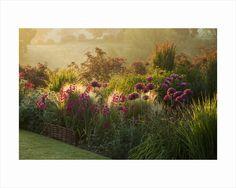 Pettifers, Oxfordshire: Dawn Light Hits A Border With Allium Firmament, Stipa Tenuissima, Gladiolus Communis Byzantinus by Clive Nichols
