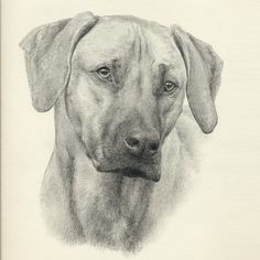 Pet Portraits by Steph Dix