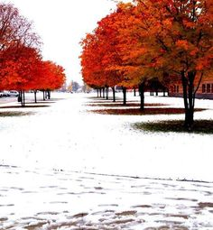 FALL?! I wish it snowed in the fall like that here! Beautiful picture though.