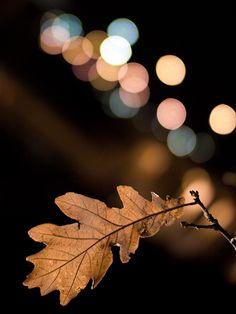 Autumn night lights
