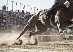 Il cuore dell'uomo è come un cavallo che corre in discesa: è facile spronarlo, ma molto difficile fermare. #horse #cavalli #quintana #forza #gurusays #gara #festival #power #ride #race