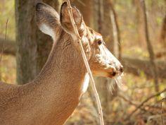 Goats, Ohio, Deer, Horses, Animals, Columbus Ohio, Animales, Animaux, Animal