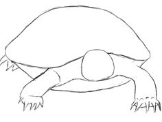 How to draw tortoise shell Cartoon Drawings, Animal Drawings, Cute Drawings, Drawing Sketches, Cute Turtle Drawings, Sketching, Turtle Sketch, Draw A Turtle, Pictures Of Turtles