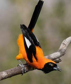 Pretty Birds, Love Birds, Beautiful Birds, Animals Beautiful, Tropical Birds, Exotic Birds, Colorful Birds, Wildlife Photography, Animal Photography