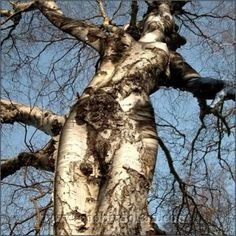 I always thought trees were pretty amazing because of their sheer size, majestic appearance and the fact that they can live for 1000s of years. But these trees are on a whole new level.