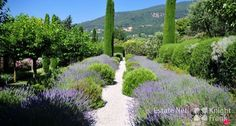 Grasse villa garden...more info on www.esatenetfrance.com