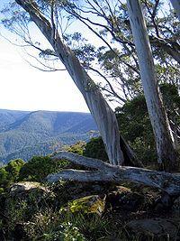 Barrington Tops NP, Mid-Coast Council [New South Wales-AU]
