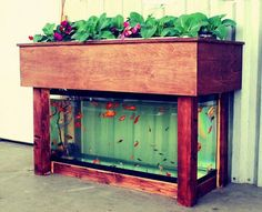 Aquaponic garden, small set up, would be great indoors. Actually this is pretty neat. Could do pet fish that you don't harvest, and grow herbs and spices on the top, like basil, sage, etc. Nice display piece if you built it right.